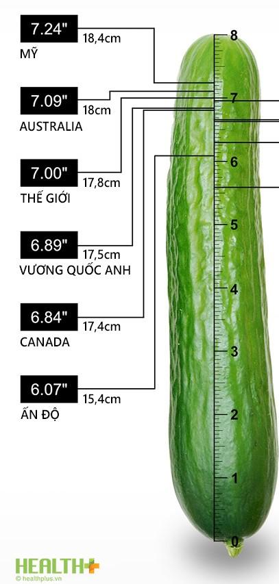 Kích thước dương vật trung bình các nước
